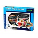Great White Shark Anatomy Model