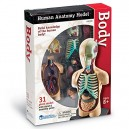 Learning Resources Anatomy Model