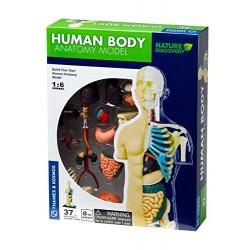 Human Body Anatomy Model